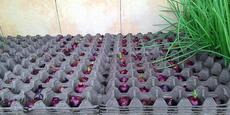 Польза лотков из-под яиц в дачном хозяйстве