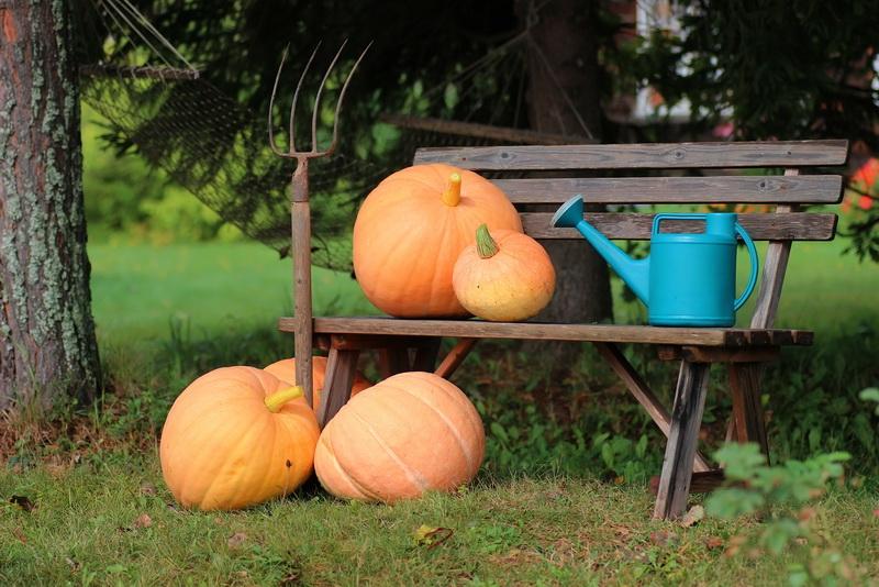 Как собрать и сохранить семена тыквы до следующего сезона