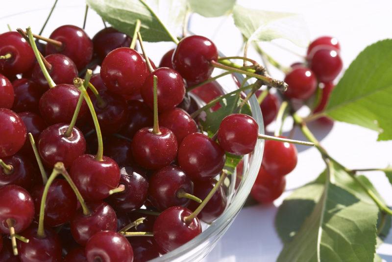 Схемы подкормок для обильного плодоношения вишни и черешни — особенности внесения удобрений