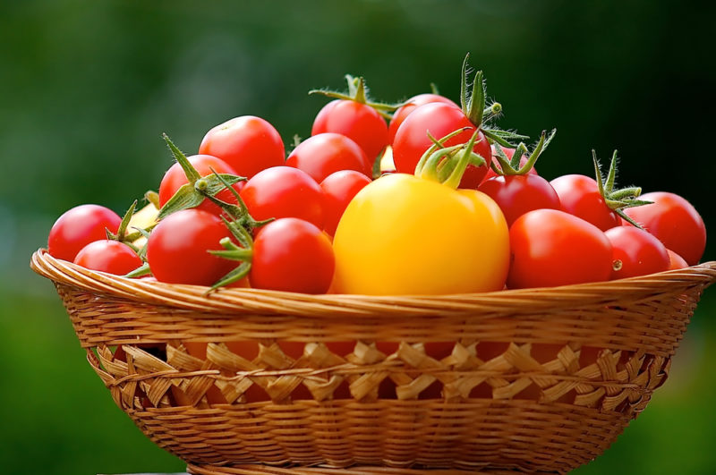Как ускорить рост томатов — «Волшебный бальзам» и другие средства