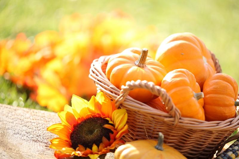 Великолепная тыква — 10 самых сладких сортов для настоящих гурманов-сластен