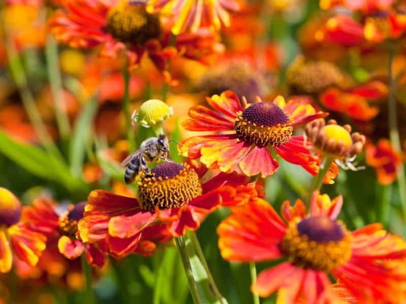 Многолетники, которые красиво цветут и не требуют особого ухода