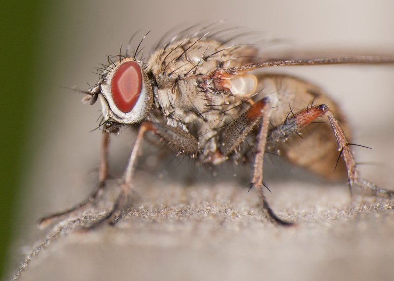 3 главных врага. Как бороться с насекомыми — вредителями белокочанной капусты