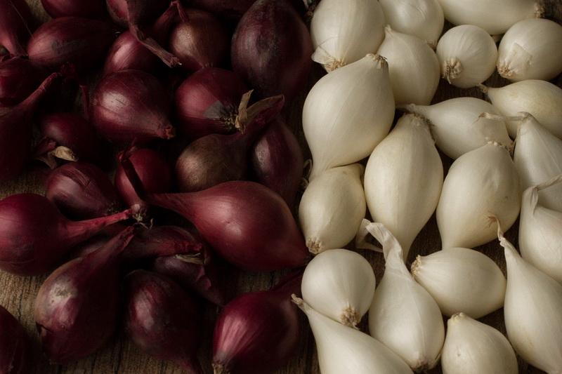 Лучшие сорта белого лука — 5 вариантов, которые вас не разочаруют