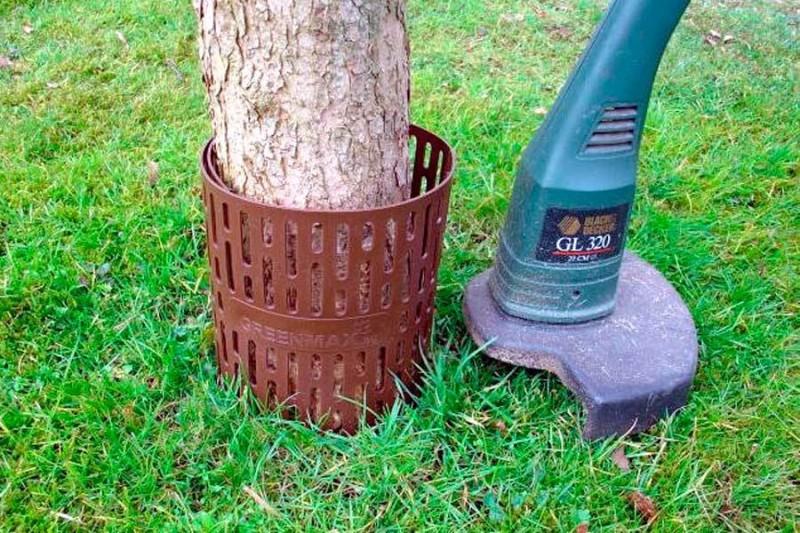 Как исправить ситуацию с повреждением дерева газонокосилкой