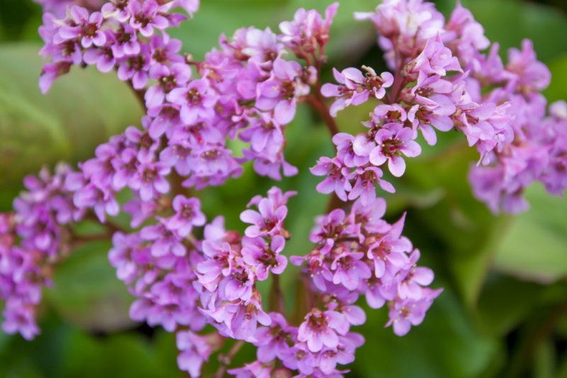 Самые красивые скальные растения
