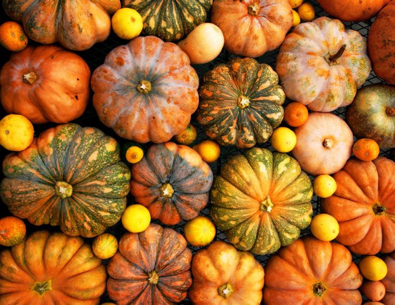 Шпаргалка огородника: как защитить овощи от болезней