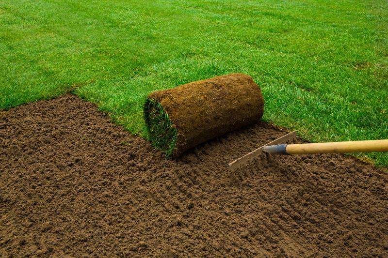 Зеленая лужайка за один день: все о рулонном газоне