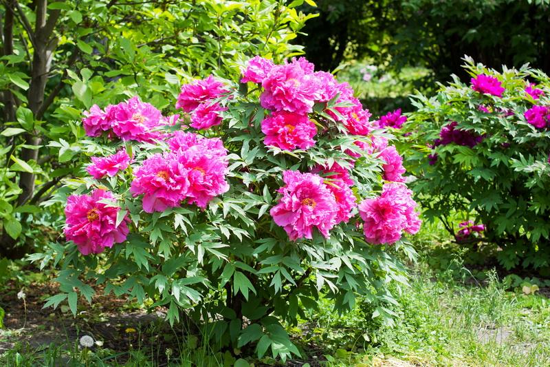 Как красиво разместить декоративные кустарники в саду