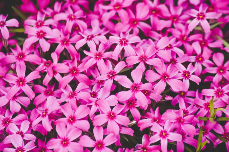 15 драгоценных украшений садового участка: разнообразные и неприхотливые цветы-многолетники
