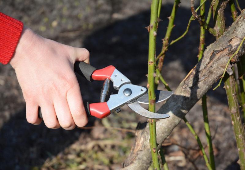 Распространенные ошибки дачников при обрезке деревьев и кустарников