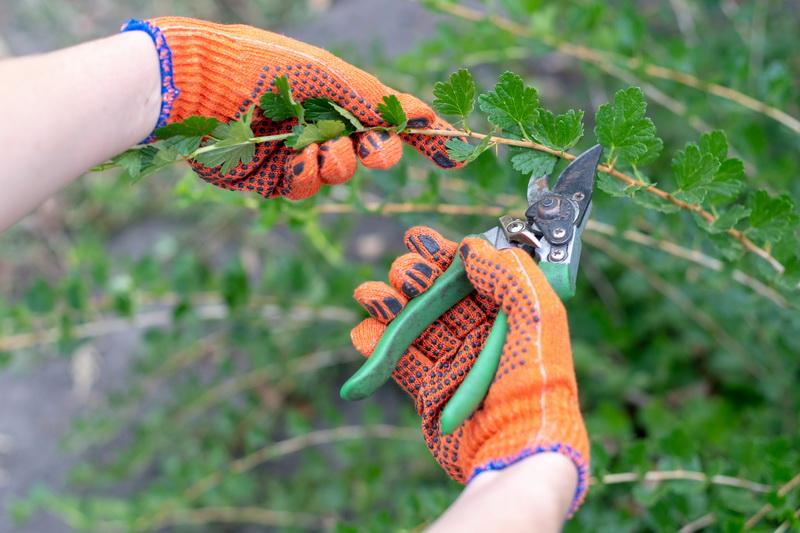 Весенняя обрезка деревьев и кустарников — как не навредить растениям