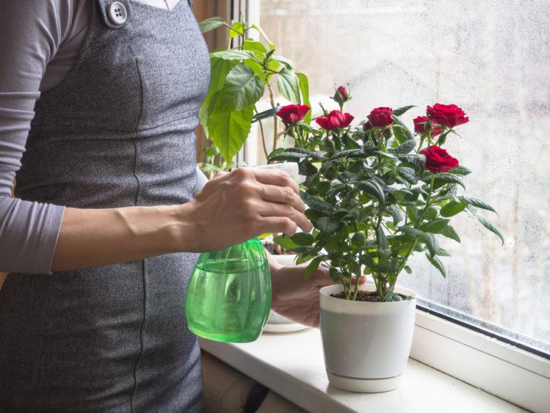 Особенный уход для привередливых комнатных растений — 5 капризных красавиц и как с ними правильно обращаться