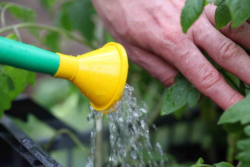 Как спасти огород от летней жары