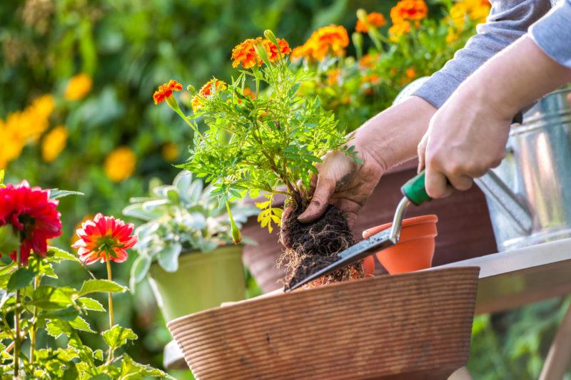10 шагов к красоте: как исправить неудачный цветник