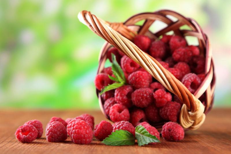 Два урожая ягод за один сезон — давно не миф. Рассказываем про ремонтантные сорта малины, ежевики и клубники