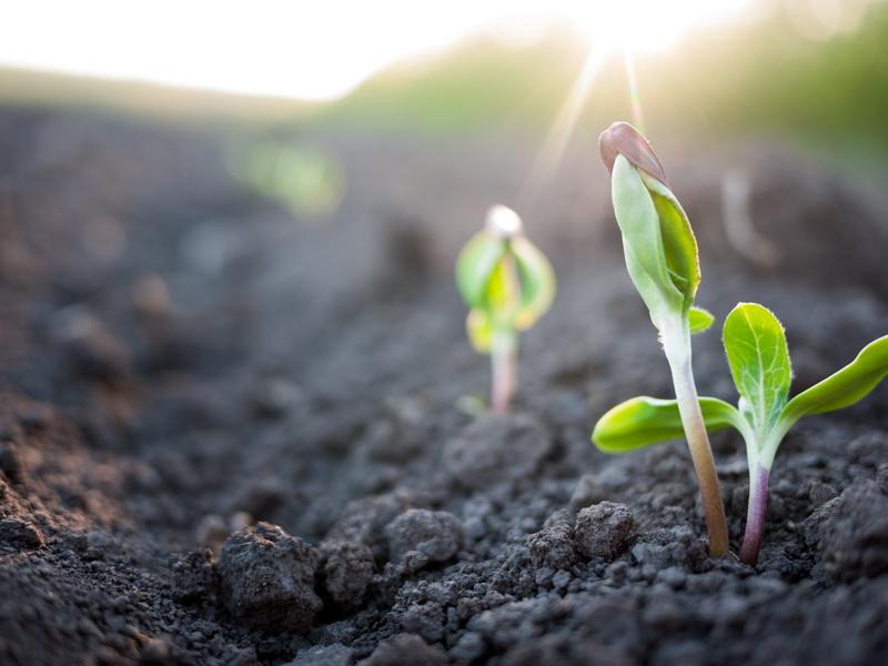 3 простых способа выращивания рассады