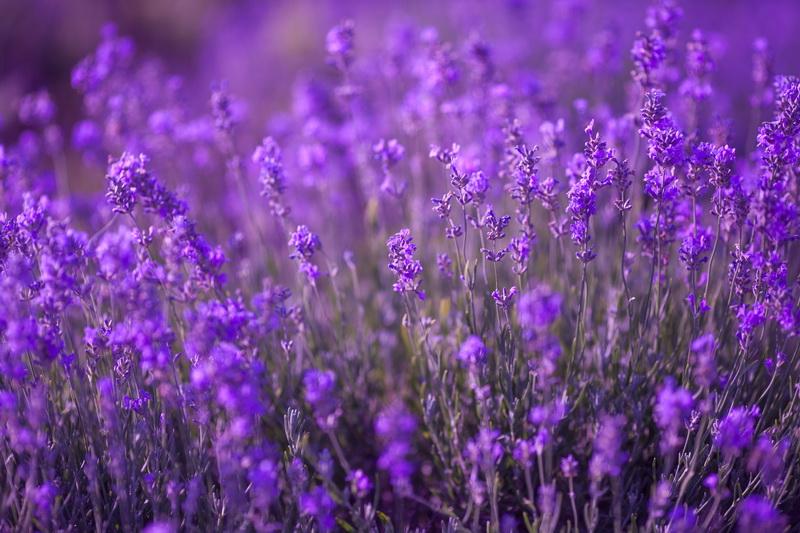 Осенний посев семян цветов: все варианты, плюсы и минусы