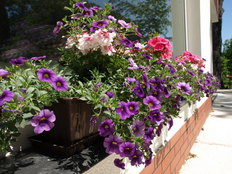 Правильное соседство цветов на клумбе — залог красоты и здоровья растений