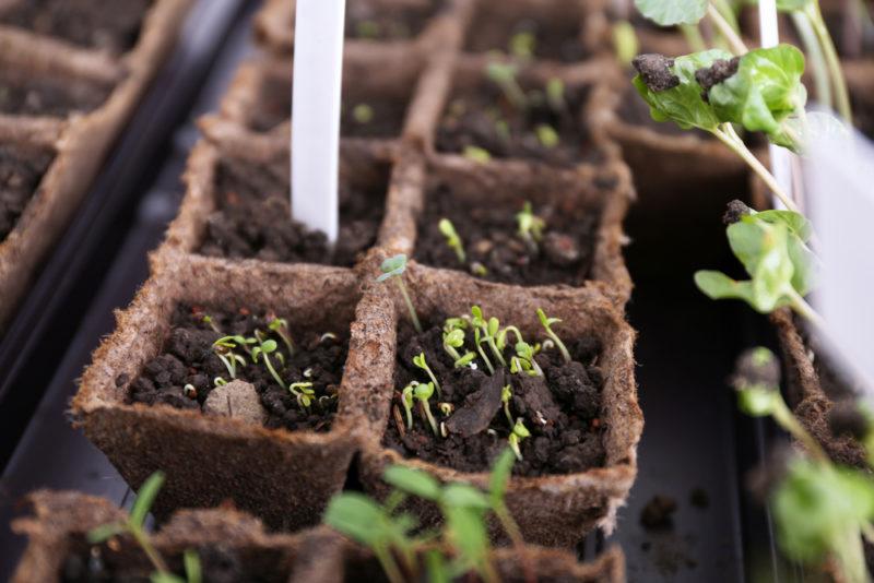 Топ-6 самых распространенных емкостей для выращивания рассады