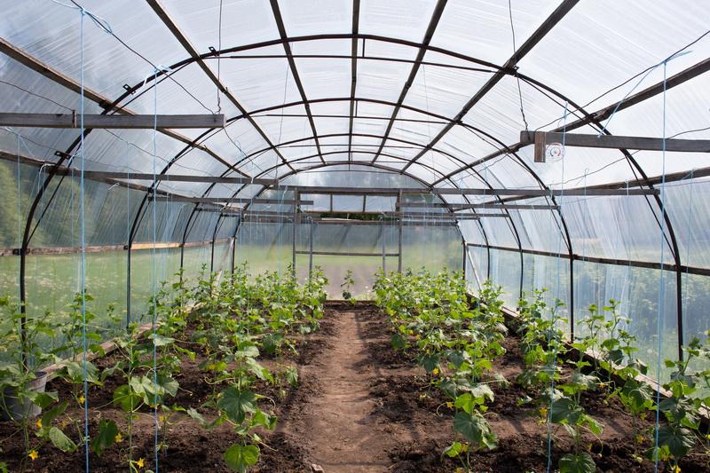 Подготовка теплицы — первый шаг к хорошему урожаю