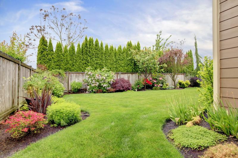 Как красиво оформить газон декоративными деревьями и кустарниками