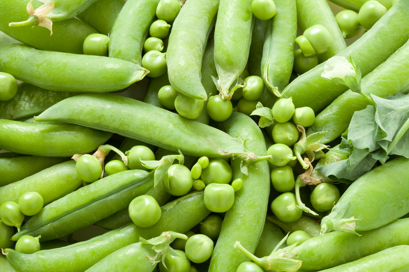 Самые неприхотливые овощи, которые легко вырастить, — топ-10