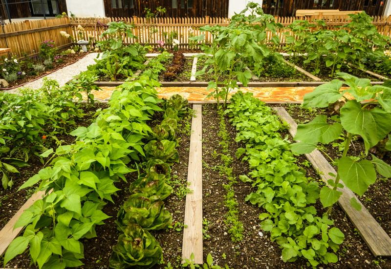 Техника Митлайдера — универсальный способ получить стабильно высокий урожай