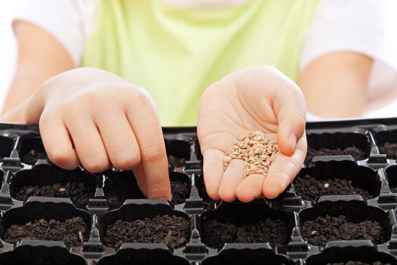 Как посеять на рассаду огурцы