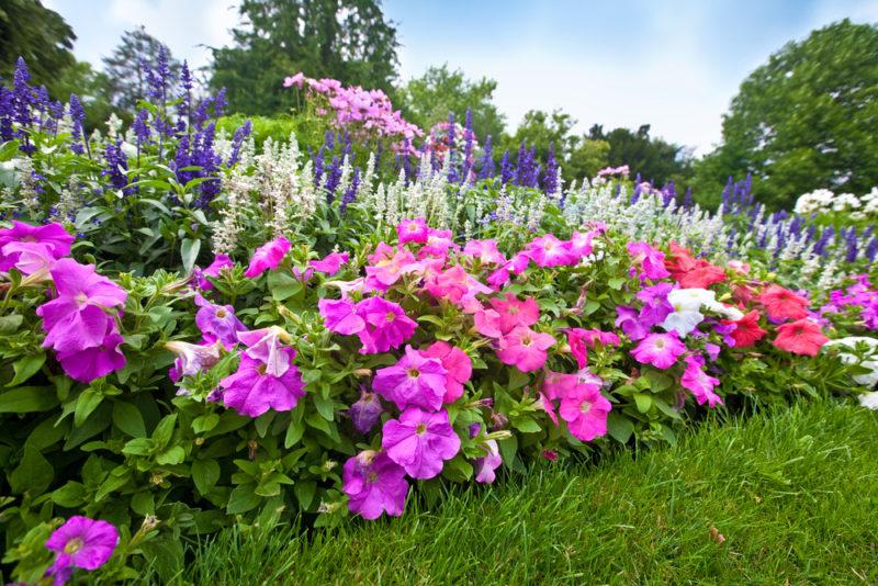 Инструкция по созданию клумб непрерывного цветения