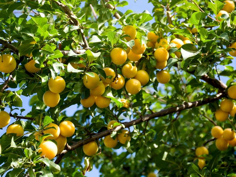 Правила посадки плодовых деревьев — 10 важных пунктов