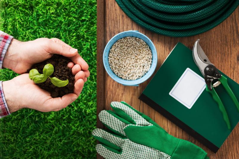 Живые бордюры из пряных трав: оригинальное решение ландшафтного дизайна и практическая польза