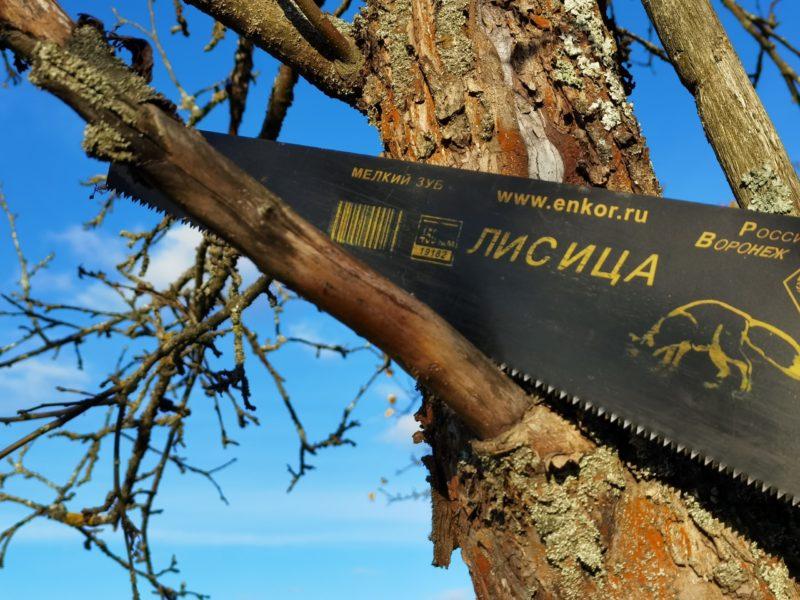 Как безопасно для дерева спилить толстую ветвь: пошаговая инструкция