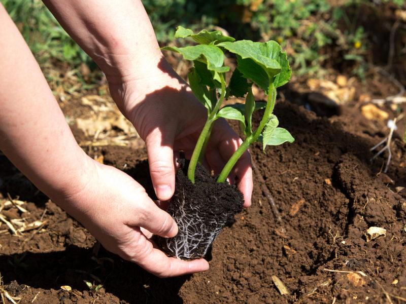 Почти всё об органическом земледелии