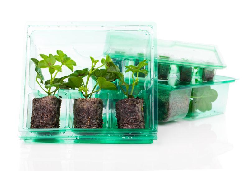 Зачем нужны торфяные таблетки в саду и на огороде: как правильно их использовать