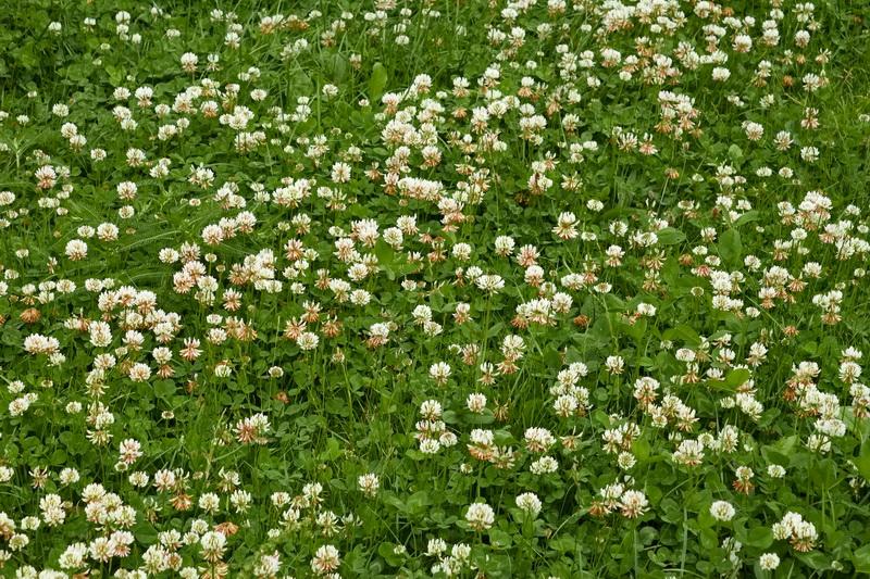 Какими способами можно избавиться от сорной травы в цветнике и на газоне