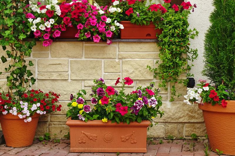 4 варианта цветовых палитр для сада