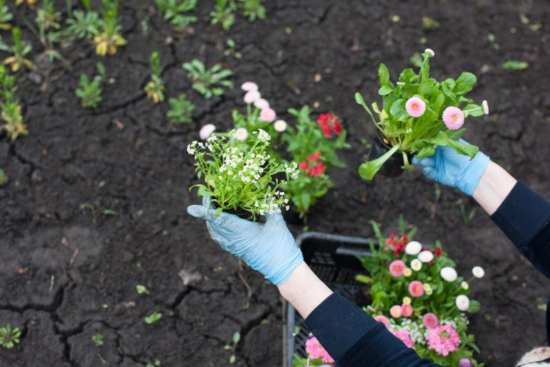 Идеальный цветник на даче: как сделать своими руками