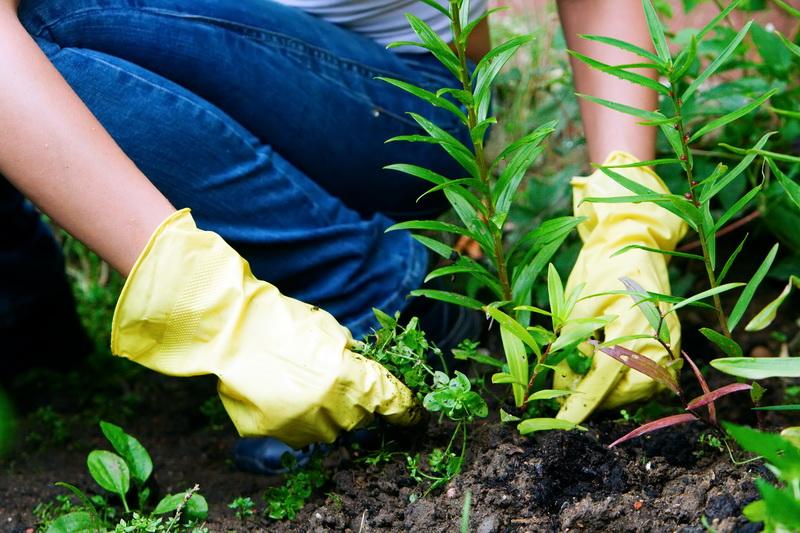 На шаг впереди: проверенные методы борьбы с сорняками