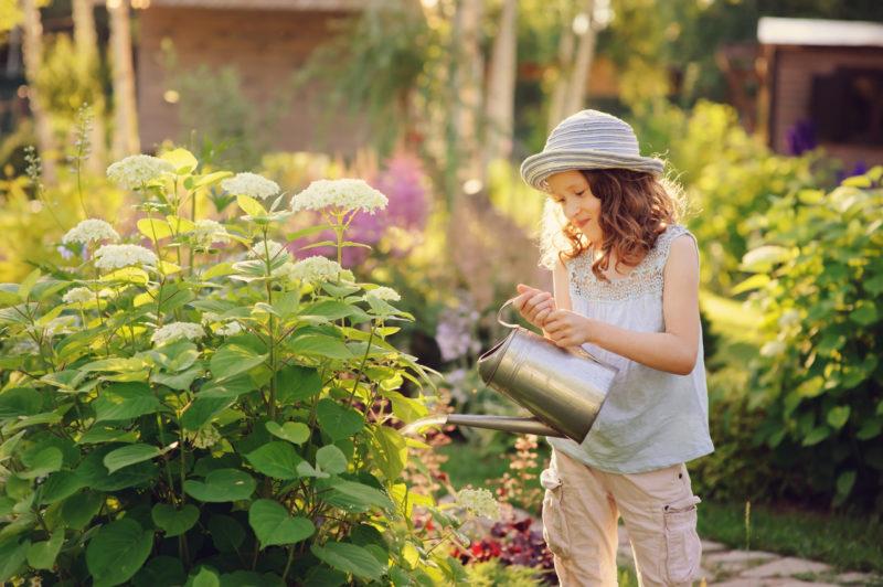 Зачем и как подкислять почву для гортензии