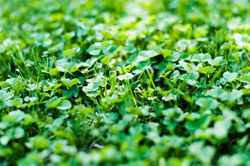 Как вырастить хороший урожай без использования «химии»: советы огородникам