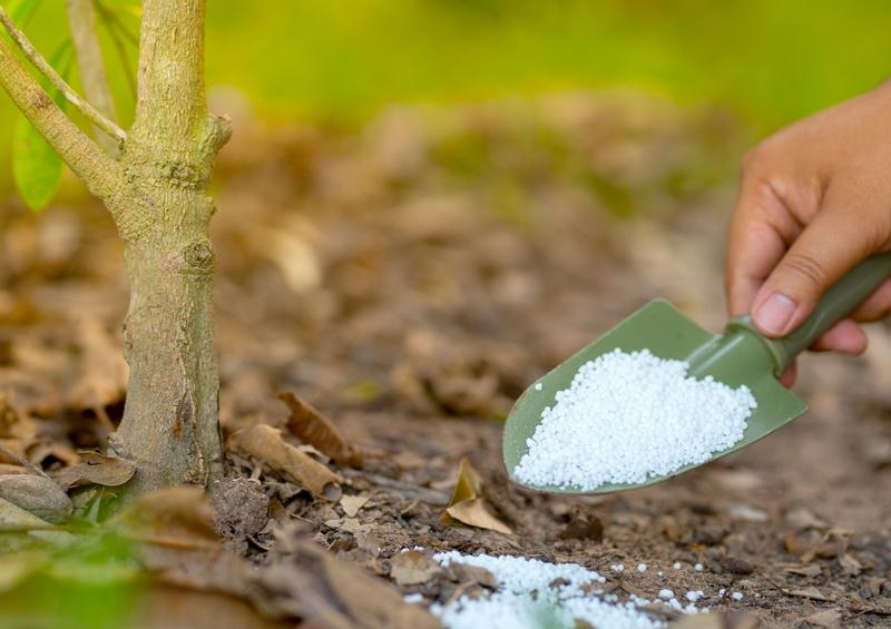 Самые важные питательные макроэлементы для нормального роста и развития растений