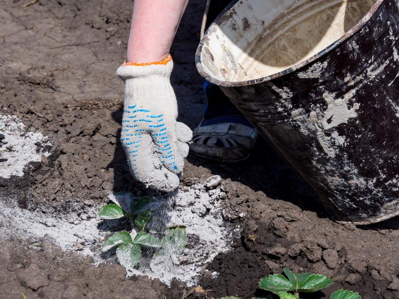 Обеспечьте уход за своими растениями: какие виды минеральных удобрений всегда нужны вашему огороду