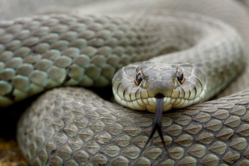 Змеи: избавляемся от неприятного соседства