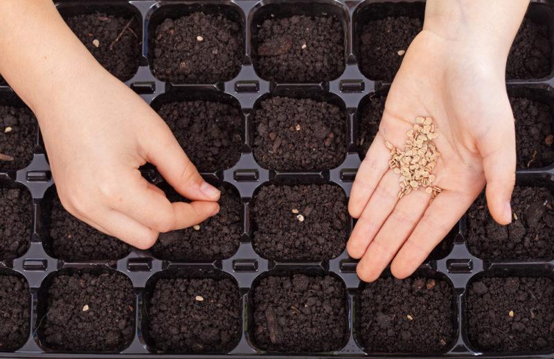 Как повысить урожайность перца: 10 проверенных рекомендаций