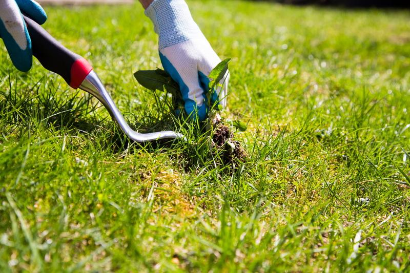 Важность уборки растительных остатков осенью