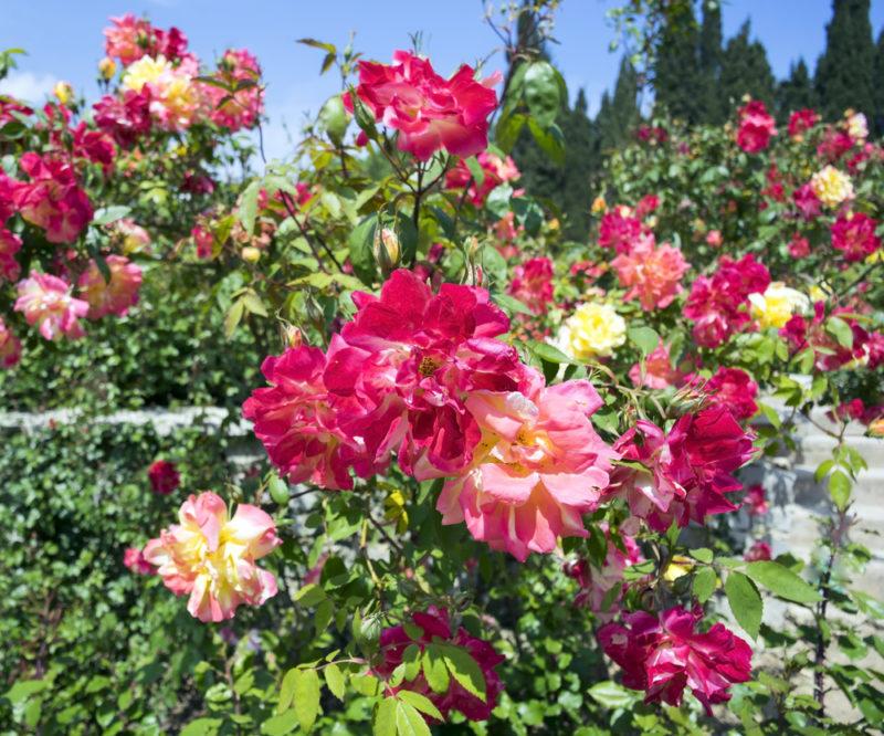 Виды цветников: названия, формы и размеры