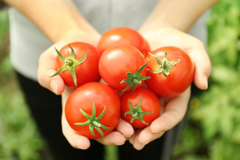 Йод помидорам для обильного цветения и активного роста