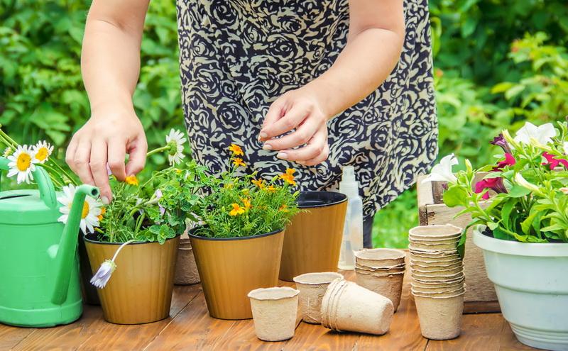 Уход за домашними цветами, чтобы росли здоровыми и красивыми
