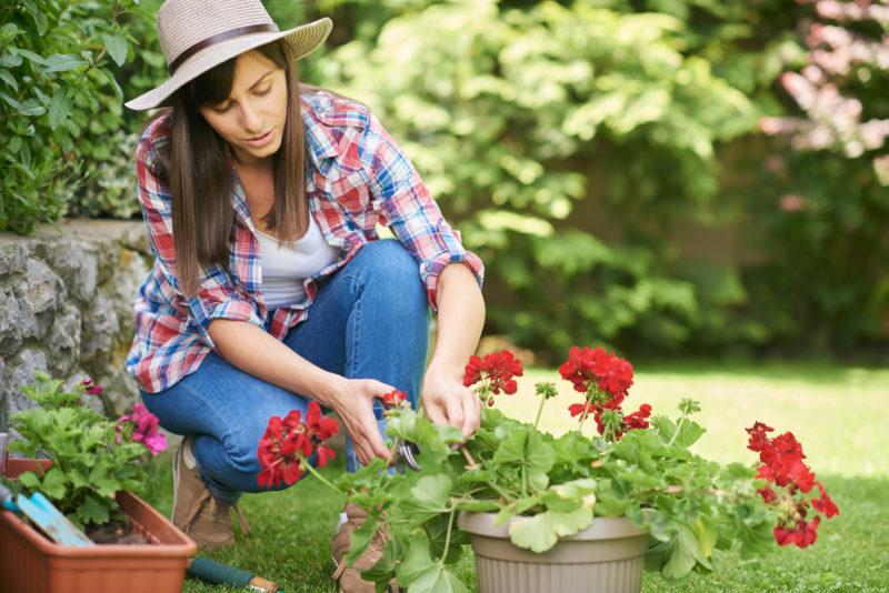 Как выбрать подходящее удобрение для герани
